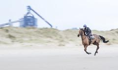Horse Racing (Simon McCabe) Tags: horse racing run motion redcar beach uk work riding ride
