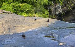 Tamarind Falls / Каскады Тамаринд (dmilokt) Tags: природа nature пейзаж landscape река river dmilokt водопад waterfall