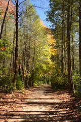 Autumn in Dupont State Forest, North Carolina (Joseph Hollick) Tags: dupontstateforest northcarolina autumn trail path