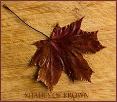 Shades of Brown (fenman_1950) Tags: smileonsaturday sonya77 shadesofbrown leaf stilllife