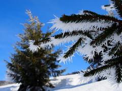 Arra van! / It is there! (debreczeniemoke) Tags: tél winter hó snow túra hiking erdő forest fa tree hegy mountain gutin gutinhegység gutinmountains kakastaréj creastacocoşului olympusem5