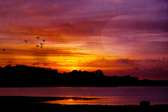 Fly me to the moon. (Birgitta Sjostedt) Tags: sunrise sunset landscape sky bird colorful beauty unique art night morning sea water