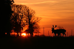 Gunton sunset (6) (jez.hull) Tags: gunton arms february 2019