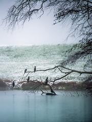 Spectators (Ingeborg Ruyken) Tags: sneeuw morning empel mist 500pxs fog natuurfotografie ochtend flickr snow
