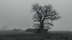 Waverley Abbey Ruins (THE NUTTY PHOTOGRAPHER) Tags: mistymorning monochrome mono trees lonetree ruins waverleyabbey