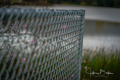 Fence (Jeffrey Balfus (thx for 4 Million views)) Tags: 90mmf28macrogossprimelensmacrosel90m28gfences sonya9mirrorless sonyilce9 sonyalpha fullframe saratoga california unitedstates us 90mm f28 macro g oss prime lens sel90m28g fencessony a9 mirrorless
