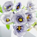 Flowers by Duncan Mercer