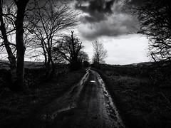 The Dark Lane (Feldore) Tags: yorkshire west witton lane dark moody ominous winding england english feldore mchugh em1 olympus 1240mm wall drystone