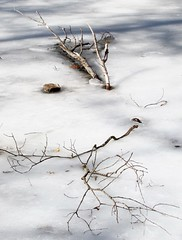 branching out (Photo Op!) Tags: ice branches frozen artistic gray winter
