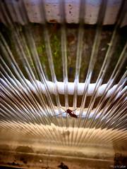 Alien (Luicabe) Tags: animal artrópodo cabello enazamorado insecto luicabe luis ngc panel paralela ventana yarat1 zamora