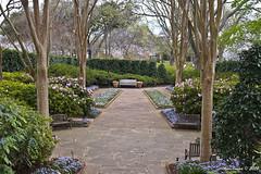 IMG_5587 (Roger Kiefer) Tags: dallas arboretum outdoors beauty nature landscape