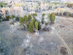 DJI_0208-HDRa (Viktor Honti) Tags: aerial aerialphotography forest hungary field tree nature landscape