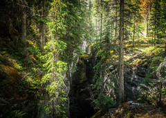Great divide (10000 wishes) Tags: forest canada chasm trees beauty light green naturephotography scenic rockies