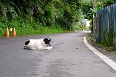 Dog (theq629) Tags: carplake animal dog taiwan hualian
