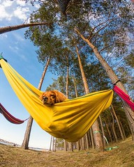 Chilling in the hammock by the lake at the end of March? And it's sunny, too?! Gotta love travelling! Have a great day, everyone! • • • • • #goprohero7 #travel #exploremore #destinationearth #welivetoexplore #gopro #backcountrypaws #keepitwild #awesome_ea (watson_the_adventure_dog) Tags: chilling hammock by lake end march and it's sunny too gotta love travelling have great day everyone • goprohero7 travel exploremore destinationearth welivetoexplore gopro backcountrypaws keepitwild awesomeearthpix roamtheplanet thursday campingwithdogs goprohero7black theoutbound discoverglobe instagoodmyphoto doglover camping instapoland getoutstayout earthofficial ilovemydog heelergram visitpoland stayandwander theglobewanderer earthfocus dogsofig