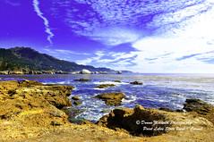 POINT-LOBOS_dsc6119 (Donna Molinari Photography) Tags: carmel cats donna donnamolinari kauai maui molinari monterey oceanviews pacificgrove parrots photography pointlobos coast