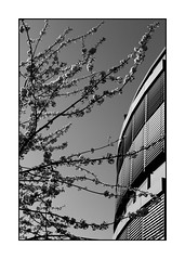 blooming (Armin Fuchs) Tags: arminfuchs würzburg zellerau spring house tree blossoms branches