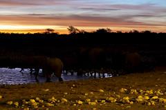 _RJS3089 (rjsnyc2) Tags: 2019 africa d850 namibia night nikon outdoors photography remoteyear richardsilver richardsilverphoto safari sunset travel travelphotographer animal camping nature stars tent wildlife