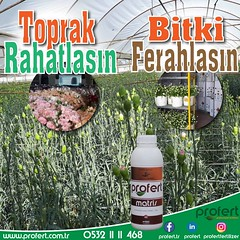 profert matris (Profert Gübre) Tags: süsbitkisi bit bitkikoruma bitki fertilizer fresh damlama domates doğalafet demokrasi
