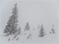 Winter Trees _93153 (uwe_cani) Tags: panasonic g9 finnland finland skandinavien scandinavia lappland lapland ylläs winter schnee snow natur nature outdoor landschaft landscape bäume trees nebel fog yllästunturi ylläsjarvi