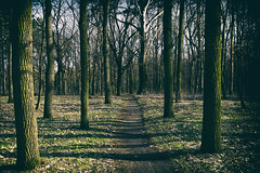Must go on (max tuguese) Tags: nature landscape naturephotography flickr outdoor outside dark maxtuguese nikon d3400 2880 forest wood scenery debrecen tree trees footpath shadow explore essence