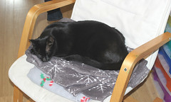 Beware of the Sleeping Cat !! (AndrewHA's) Tags: essex harlow animal cat pet elves