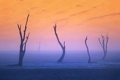The Council (Hilton Chen) Tags: namibdesert sunrise silhouette namibia sanddunes camelthorntrees deadvlei foggy landscape misty sossusvlei namibnaukluftnationalpark hardapregion na