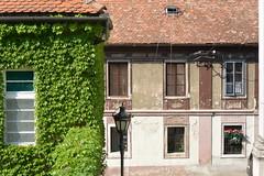 window, ivy and lamp (Hayashina) Tags: serbia petrovaradin ivy window house roof lamp hww