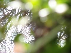 Leaves blur effect (Valdegris) Tags: leaves blur transparency feuilles flou transparence green vert