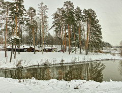Pine-trees in winter... (Pavel K) Tags: winter pines pine pinetrees reflection snow outdoor landscape lake nikon nikond7000 january sigma175028 panorama panoramicshot shadows nikond7000cafe hdr tree forest wood sky mountain hills camp river water reflections
