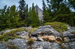 Rock Shelf Below Castle Mountain (Bracus Triticum) Tags: アルバータ州 alberta canada カナダ 9月 九月 長月 くがつ kugatsu nagatsuki longmonth 2018 平成30年 fall autumn september rock shelf below castle mountain