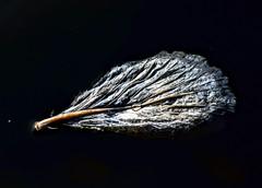 Fallen Leaf (pmorris73) Tags: arboretum pennstateuniversity statecollege pennsylvania century 2cb1219 3cb1319 4cb1419 5cb1719 6cb2519 7cb2719 8cb2819 9cc2319