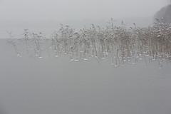dance in the snow III (Mindaugas Buivydas) Tags: lietuva lithuania color winter december minimal minimalism sadnature reed akmena lake trakųistorinisnacionalinisparkas trakaihistoricalnationalpark mindaugasbuivydas