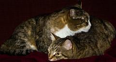 keeping warm. (ttounces) Tags: marty henry keeping warm ttounces ~jan~ cats 1001nights