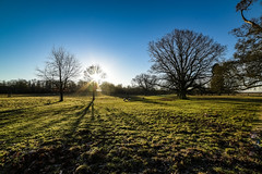 light through the tree (Paul Wrights Reserved) Tags: light shadow tree sheep colour vibrant treescape landscape landscapes landscapephotography sky bluesky cattle grazing herd scenic scene scenery