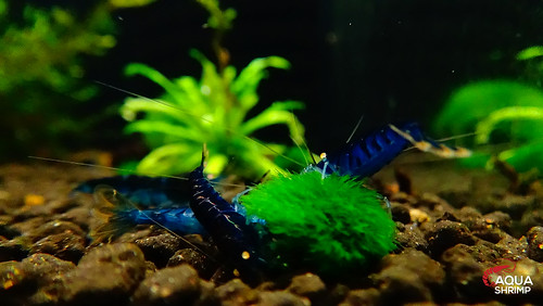 AquaShrimp 👍