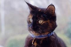 Cocoa the cat