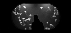 jellyfish window (Sitoo) Tags: aquarium oceanografic valencia window jellyfish monochrome blackwhite people silhouette acuario animals underwater