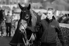 DSC_0686 (fullerton42) Tags: straftford racecourse stratfordracecourse horse horses racehorse horseracing race punter punters specatators sport equine england