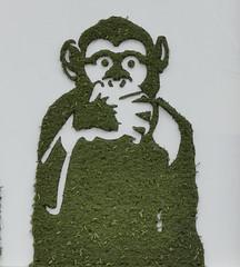 Mister Ride - Ne rien dire (Thethe35400) Tags: artderue arteurbano arturbain arturbà arteurbana calle fresque grafit grafite grafiti graffiti graffitis graff mural murales muralisme plantilla pochoir stencil streetart schablone stampino tag urbanart wall végétal vegetal green singe singes monkeys