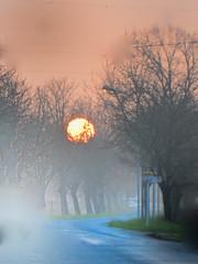 Coucher (JDAMI) Tags: coucher soleil coucherdesoleil arbres troncs contrejour ciel brume route nikon d600 tamron 2470 médoc gironde 33 nouvelleaquitaine france ambès aquitaine sunset sun macau hautmédoc