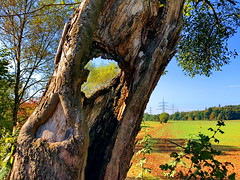 It's alive even with a hole in its trunk! (peggyhr) Tags: peggyhr treetrunk trees hole grass green blue img8440a southwestgermany autumn textures sunlight carolinasfarmfriends heartawards super~sixbronze☆stage1☆ thelooklevel1red infinitexposurel1 infinitexposurel2 thelooklevel2yellow level1peaceawards thegalaxy thegalaxystars thegalaxylevel2 thegalaxystarshof 50faves thegalaxylevel2halloffame