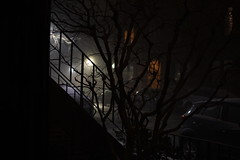 Snow squall in the City (Brooks Payne) Tags: brooks brooksbos city urban boston massachusetts newengland snow squall lights lamps doorways townhouses southend nikon d5600 tree branches
