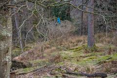 Dear Lake District visitors... (DJNanartist) Tags: nikond750 nikon28300mm lakedistrict anartist derwentwater catbells