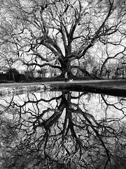 Je suis plus beau que toi ! (danielolivier) Tags: tree nature dog master water bw reflet wood