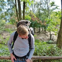 Pairi Daiza (73) (Johnny Cooman) Tags: lensmontignieslezlens wallonie belgië bel brugelettecambroncasteau animal dieren natuur ベルギー aaa panasonicdmcfz200 henegouwen hainaut belgium bélgica belgique belgien belgia zoo