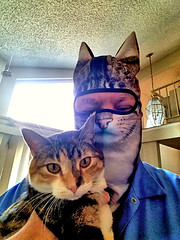 Aphrodite and Crazy Cat Man (EmperorNorton47) Tags: portolahills california photo digital winter man middleaged mask balaclava hemingwaycat cat calicocat tabbycat tabico selfportrait selfie selfpic littledoglaughedstories