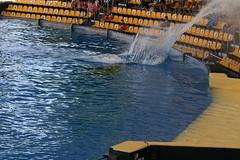 Splash! [2] (Ian R. Simpson) Tags: orca whale animal killerwhale loroparque zoo tenerife canaryislands spain swimming pool water splash audience puertodelacruz
