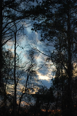 Sky And Trees. (dccradio) Tags: lumberton nc northcarolina robesoncounty outdoor outdoors outside nature natural sky tree trees woods wooded forest march monday spring springtime evening mondayevening goodevening nikon d40 dslr cloud clouds