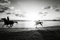 Ride'em (Reto Togni Pogliorini) Tags: blackwhite bw horses horserace race beach sunset dynamic nature caribbean colombia kolumbien providencia